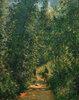 Weg unter Bäumen, Sommer