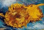 Zwei abgeschnittene Sonnenblumen