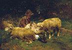Schafe mit Hirt