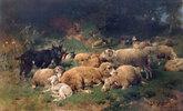 Ruhende Schafe am Waldrand