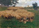 Schafherde auf der rauen Alb