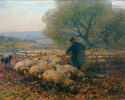 Schafe, den Pferch verlassend