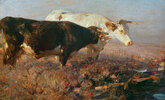 Kühe im Moor