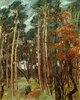 Hermsdorfer Wald am grauen Tag