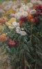 Chrysanthemums in the Garden at Petit-Gennevilliers