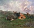 Ruhendes Vieh auf einem Hügel in den Alpen