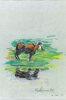 Etude de vache