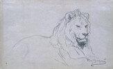 Studie eines Löwenkopfes
