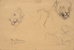 Studies of a Lioness
