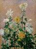 Chrysanthèmes blancs et jaunes