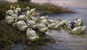Enten am See-Ufer