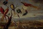 Aus dem Zyklus Die vier Erdteile: Randbild der Tafel Amerika: Vögel