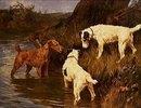 Drei Terrier an einer Uferböschung