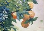 Ast mit Orangen
