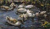 Neun Enten im Vorfrühling