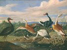 Acht Wasservögel an einem Teich.