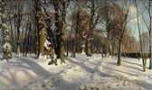 Verschneiter Winterwald im Sonnenlicht