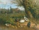 Enten mit Kücken am Wasser