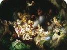 Titanias Elfen rauben das Nest eines Eichhörnchens aus