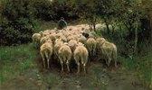 Ziehende Schafherde im Wald