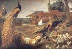 Eine Krähe in Pfauenfedern