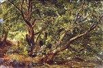 Bäume an einem Bach