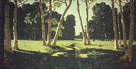Birkenstämme im Sonnenlicht