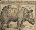 Nashorn. 1515. Für König Emanuel