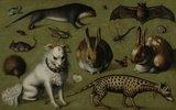 Tierbild mit Ginsterkatze