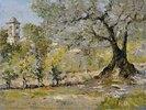 Olivenbäume bei Florenz