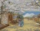 Kirschbaumblüte bei Sonnenschein, Nogeyama, Yokohama