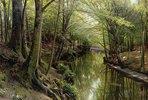 Gewässer in einem Wald