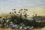 Wiesenblumen, im Hintergrund Ferry Carrig Castle, Wexford