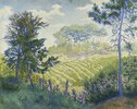 Weinberg unter Pinien (Les Vignobles sous les Pins)
