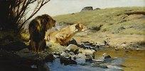Ein Löwe und eine Löwin an einem Bach