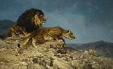Löwen auf dem Raubzuge