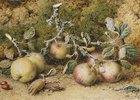 Stillleben mit Äpfeln und Haselnüssen
