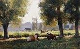 Weidende Kühe in Arques-la Bataille, Normandie