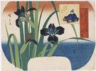 Sommer, Schwertlilien bei Yatsuhashi in der Provinz Mikawa. Aus der Serie 'Blumen der vier Jahreszeiten'