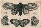 Eine Motte, drei Falter und zwei Käfer. 1646. Aus dem 'Muscarum Scarabeorum', Antwerpen