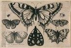 Fünf Schmetterlinge, eine Motte und zwei Käfer. 1646. Aus dem 'Muscarum Scarabeorum', Antwerpen 1646, Tf. [6/2]. Bezeichnet unten links: 'WHollar fecit ex Collectione Arundeliana 1646.'