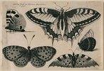 Fünf Schmetterlinge. 1646. Aus dem 'Muscarum Scarabeorum', Antwerpen 1646, Tf. 6 (nummeriert oben rechts). Bezeichnet oben links: 'WHollar fecit ex Collectione Arundeliana / 1646.'