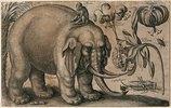 Elefant, Affe, Heuschrecke und Pflanzen. Um 1663