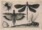 Libellen, ein Falter, eine Motte und eine Hummel. 1646. Aus dem 'Muscarum Scarabeorum', Antwerpen 1646, Tf. 10. Bezeichnet oben rechts: 'WHollar fecit ex Collectione / Arundeliana 1646.'