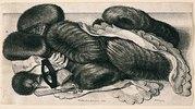 Pelzwerk und Putz. 1647. Bezeichnet unten Mitte: 'WHollar fecit Aqua forti 1647; unten rechts: 'Antuerpiae', Pennington 1982, Nr
