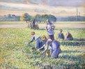 Erbsenernte (La Récolte des Pois)