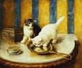 Eine Katze betrachtet sich im Spiegel (Feline Reflections)