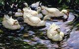 Enten auf einem sonnenbeschienenen See
