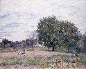Walnussbäume im Abendlicht - Anfang Oktober (Les Noyers, Effet de Soleil Couchant - Premiers Jours d'Octobre)