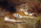 Ein liegender Tiger